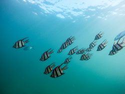 Shoal of fish moving - Movement Makers